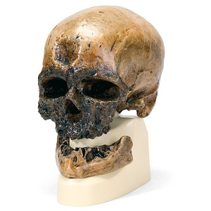 Replica Mensenschedel (Crô-Magnon)