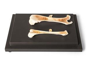 Vogel en Zoogdierbot, structuur en specimen